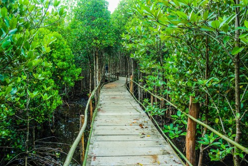 Development of Mangrove Park at Manori